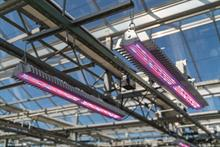 How indoor growers can successfully finance greenhouse innovations