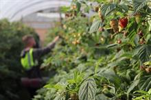 Seasonal worker pilot scheme to rise to 10,000 workers next year