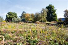 Horticulture Week Custodian Award - Best Planting Design (site or series of sites under three hectares in total)