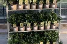Ornamental horticulture and garden centre 2018 review