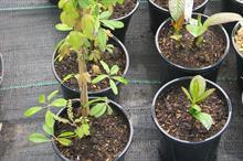 What's next for plastic plant pots?