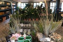 Peat-free houseplants - do they exist on a commercial scale?