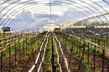 Relief for Kent grower as polytunnels gain full planning permission