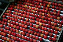What are the main trends in the European apple industry?
