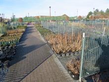Provender Nurseries shows off changes