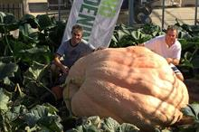 Pinetops Nursery grows 174 stone pumpkin in Westland compost