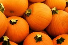 Alert: rot, mildew and aphid risk for cucurbits