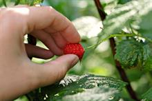 Are the Government's additional seasonal farm worker places enough?