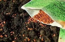 Rare seed varieties to cost up to £300 each to register on UK Brexit list