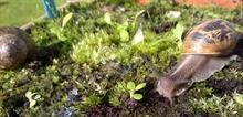 Study discovers slug and snail preferences