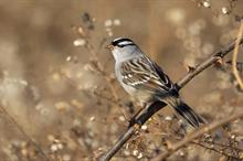 Neonics may also impact bird populations, researchers say