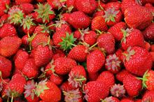 Pesticides in fresh food: latest figures published with strawberry exceedances doubling