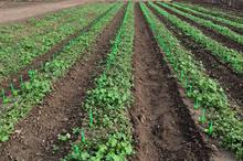 """""""Machine readable"""" crops can improve automatic weeding, say US researchers"""