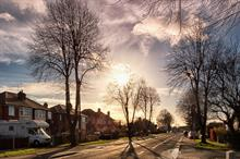 What will the Government's planned street tree laws mean for managers?