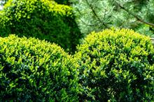 Topiary searches rise 60%