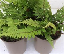 Seiont Nurseries to offer taupe plant pot