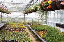 June 2021: Garden centre EPOS data for June