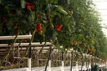 Bayer tie-up to take UK biocontrol to global market