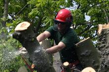 What is holding back recruitment and skills in arboriculture?