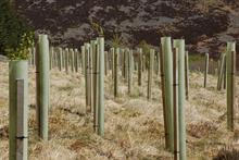 Forestry Commission stresses need for responsible use of plastic tree guards