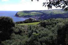Thousands of new trees planted across the Glens of Antrim