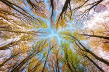 TAKKT Group sponsors 300,000 trees for the Eden Reforestation Project