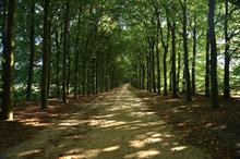 What are the best tree varieties for storing carbon?
