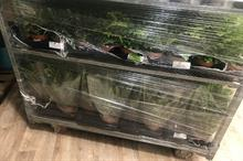 Defra place of destination import rules changed, suggest plant traders UPDATED