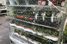 New post-Brexit plant health inspection £183 fees import 'utterly illogical' says grower UPDATED