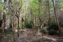 """Managed woodland brings """"natural capital"""" as well as financial gains, says RFS"""