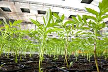 AIPH will announce the results of the first global plant health programmes survey at the virtual Plant Health Conference 2021
