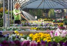 Wyevale Garden Centres sees sales rise 42% year on year