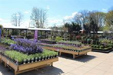 May garden centre sales rise 19%