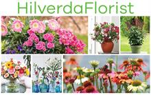 HilverdaKooij and Florist Holland to operate under joint brand name