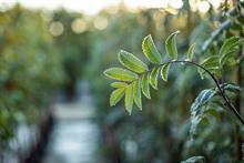 Nicholsons Nurseries to focus on core tree business