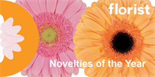 Florist Holland receives two novelty awards for standard gerberas Glossy and Jetset