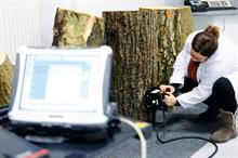Arborists working with university researchers to trial tomography-based disease assessments
