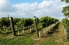 "Remove ""harsh treatment"" of English sparkling wines, producers urge"