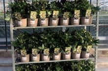 Waitrose trials taupe recyclable plant pots