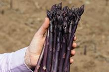Waitrose launches UK-grown crimson asparagus