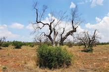RHS plant health head takes on Xylella research role