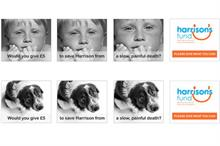 Harrison's Fund launches 'I wish my son was a dog' campaign