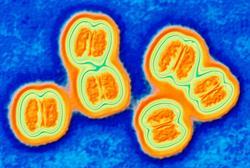 First vaccine for meningitis B 'imminent'