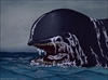 Thar she blows: Whaling attacks likely to rise in 2016