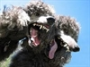 Poodle flaw opens encrypted web traffic to attack