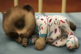 Top 10 ads of the week: Usain Bolt beaten to first place by the baby meerkat