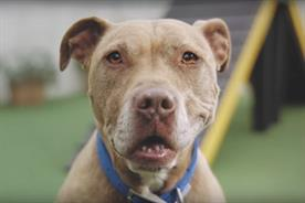 Battersea Dogs & Cats Home's autumn campaign is called 'happiness starts at Battersea'