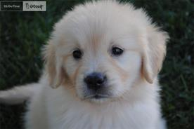 The fate of GoDaddy's puppy raised hackles.