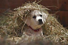Budweiser: 'Lost Dog' Super Bowl campaign.
