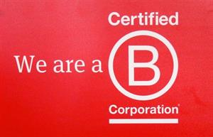 Join the B Hive: Why agencies are seeking B Corp certification